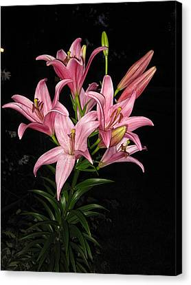Pink Lilies At Night Canvas Print by Elisabeth Ann