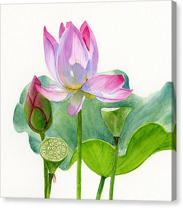 Pink Lotus Blossom With Pad And Bud Canvas Print by Sharon Freeman