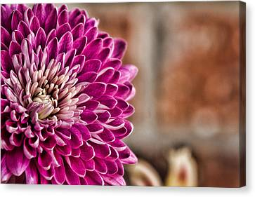 Pink Mum Canvas Print by Lana Trussell