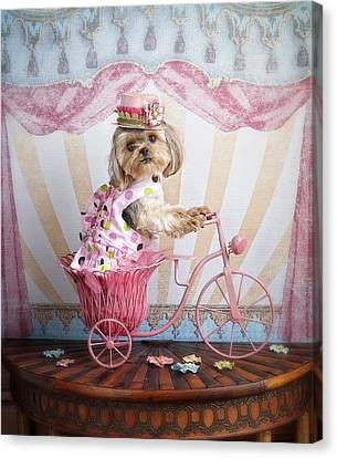 Pink Peddler Canvas Print by Lisa Jane