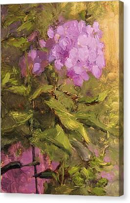 Pink Phlox Canvas Print by Tracie Thompson