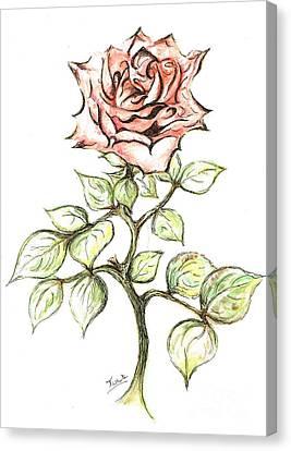 Pink Rose Canvas Print by Teresa White