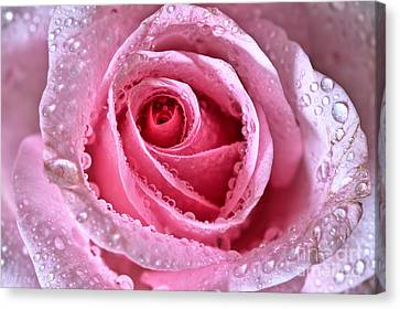 Pink Shimmering Rose Canvas Print by Tracy  Hall