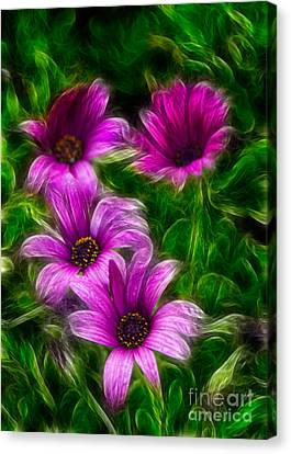 Pink  Canvas Print by Stelios Kleanthous