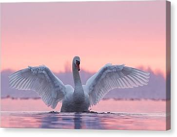 Pink Swan Canvas Print by Roeselien Raimond