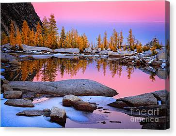 Pink Tarn Canvas Print by Inge Johnsson