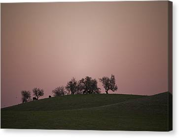 Pink Twilight Canvas Print by Joel Moranton