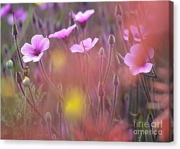 Pink Wild Geranium Canvas Print by Heiko Koehrer-Wagner
