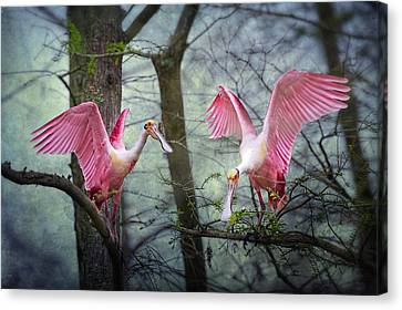 Pink Wings In The Swamp Canvas Print by Bonnie Barry