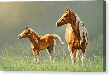 Pinto Mare And Colt Canvas Print by Paul Krapf