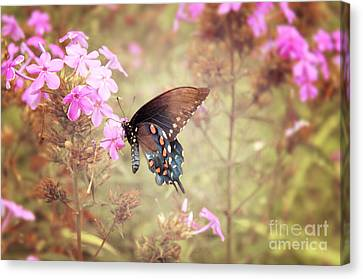 Pipevine Swallowtail Butterfly Canvas Print by Lena Auxier