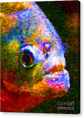 Piranha Canvas Print by Wingsdomain Art and Photography