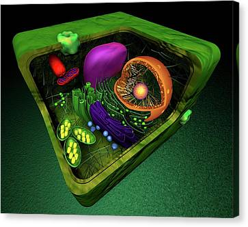 Plant Cell Canvas Print by Sci-comm Studios