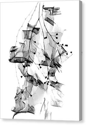 Plant Foliage And Bark Shavings Canvas Print by Albert Koetsier X-ray