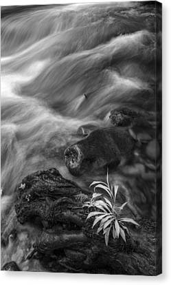Little Plant Canvas Print by Jon Glaser