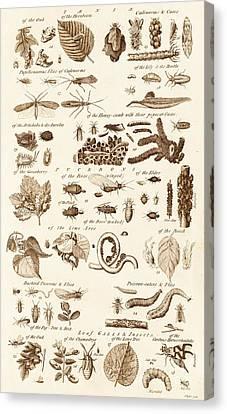 Plant Parasites Canvas Print by David Parker