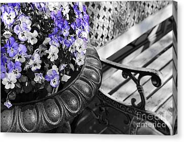 Planter With Pansies And Bench Canvas Print by Elena Elisseeva