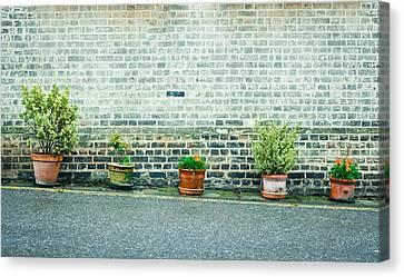Plants In Pots Canvas Print by Tom Gowanlock