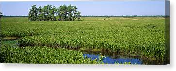 Plants On A Wetland, Jean Lafitte Canvas Print by Panoramic Images