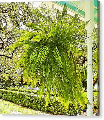 Plants-showy Southern Fern - Luther Fine Art Canvas Print by Luther   Fine Art