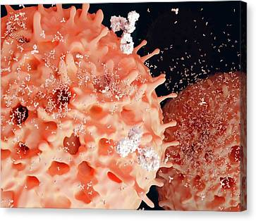 Plasma Cells Canvas Print by Juan Gaertner