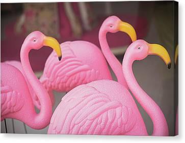 Plastic Pink Flamingos, Charleston Canvas Print by Julien Mcroberts