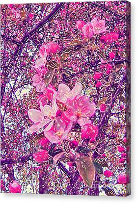 Plastic Wrapped Crabapple Blossom Canvas Print by Minding My  Visions by Adri and Ray
