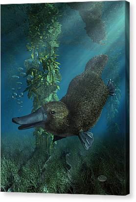 Platypus Canvas Print by Daniel Eskridge
