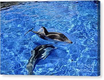 Playful Dolphins Canvas Print by Brenda Kean