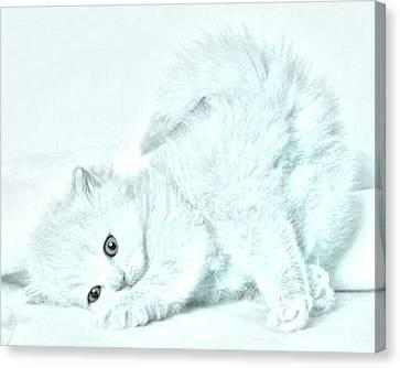 Playful Kitty Canvas Print by J D Owen