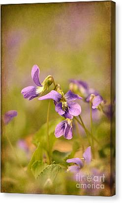 Playful Wild Violets Canvas Print by Lois Bryan