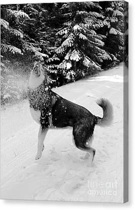 Playing In The Snow Canvas Print by Carol Groenen