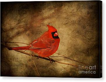 Please Feed The Birds Canvas Print by Lois Bryan