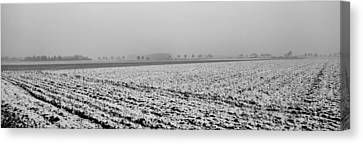 Ploughed Acre In Winter - Monochrome Canvas Print by Ulrich Kunst And Bettina Scheidulin