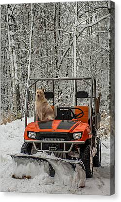 Plowing Companion Canvas Print by Paul Freidlund