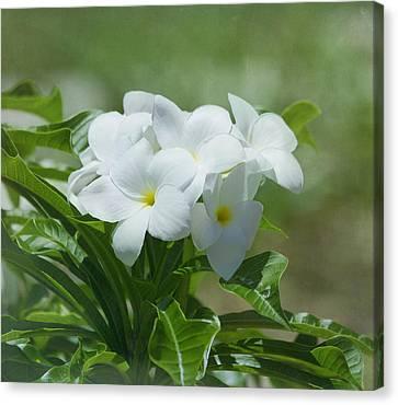 Plumeria - Tropical Flowers Canvas Print by Kim Hojnacki