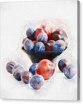 Plums On White Canvas Print by HD Connelly
