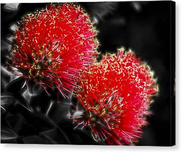 Pohutukawa Tree Canvas Print by motography aka Phil Clark