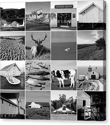 Point Reyes National Seashore 20150102 Black And White Canvas Print by Wingsdomain Art and Photography