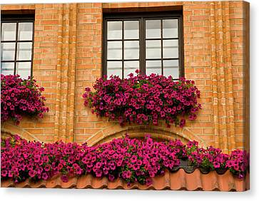 Poland, Gdansk Window Boxes With Purple Canvas Print by Jaynes Gallery