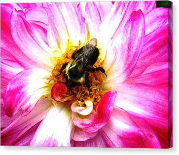 Pollination Nation 2 Canvas Print by Will Boutin Photos