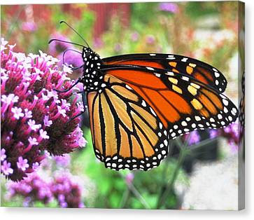 Pollination Nation 3 Canvas Print by Will Boutin Photos