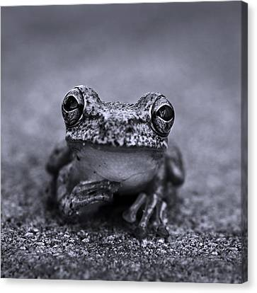 Pondering Frog Bw Canvas Print by Laura Fasulo