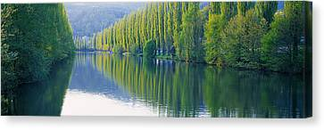 Poplar Trees On River Aare, Near Canton Canvas Print by Panoramic Images