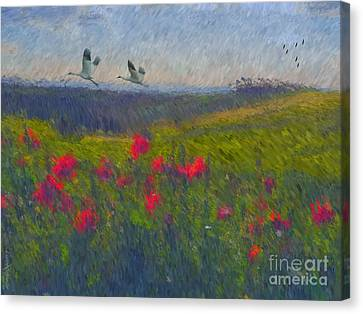 Poppies Of Tuscany Canvas Print by Lianne Schneider