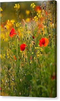 Poppy Delight  Canvas Print by Roeselien Raimond