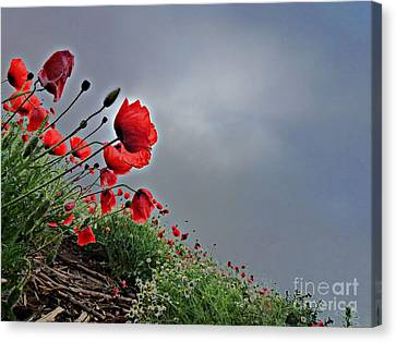 Poppy Field After Summer Storm Canvas Print by AmaS Art