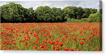 Poppy Field Canvas Print by John Short