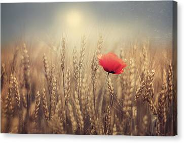 Poppy Canvas Print by Magda  Bognar