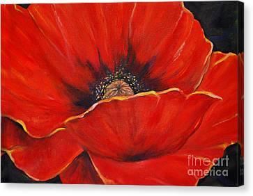 Poppy Canvas Print by Nancy Bradley